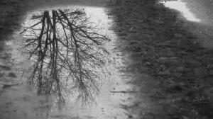 La pluie flaque